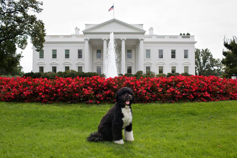 Bo admits he will miss the White House.